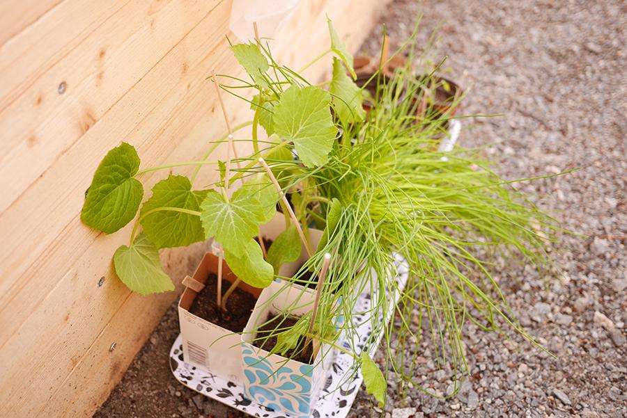 tuulinenpaiva.fi plants