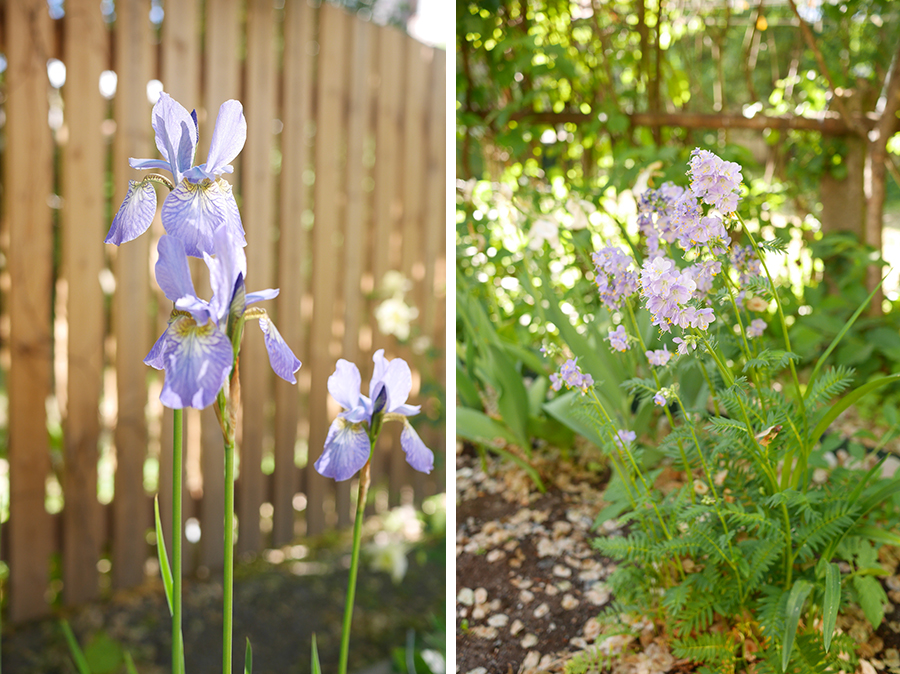 tuulinenpaiva.fi-blue-perennials
