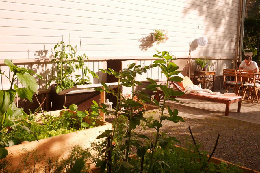 tuulinenpaiva.fi-garden-in-june4