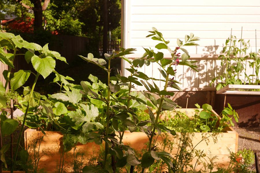 tuulinenpaiva.fi-garden-raised-garden-beds2