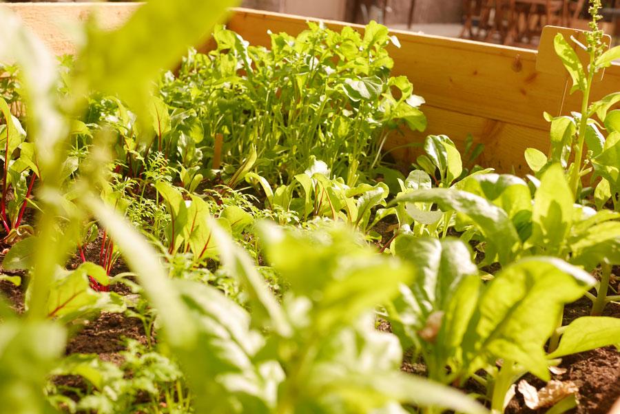 tuulinenpaiva.fi-raised-garden-beds15