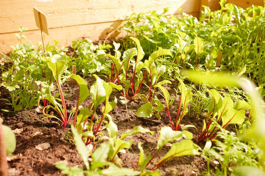 tuulinenpaiva.fi-raised-garden-beds17
