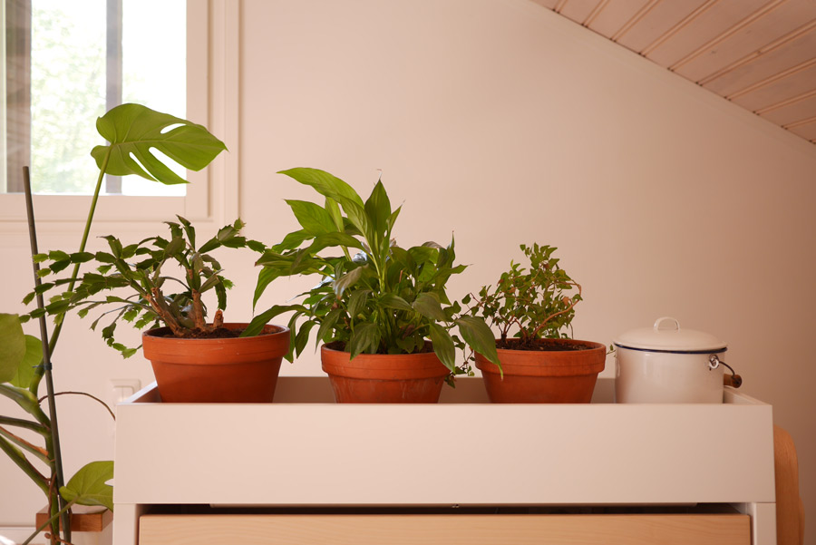 tuulinenpaiva.fi-plants-ikea-shelf
