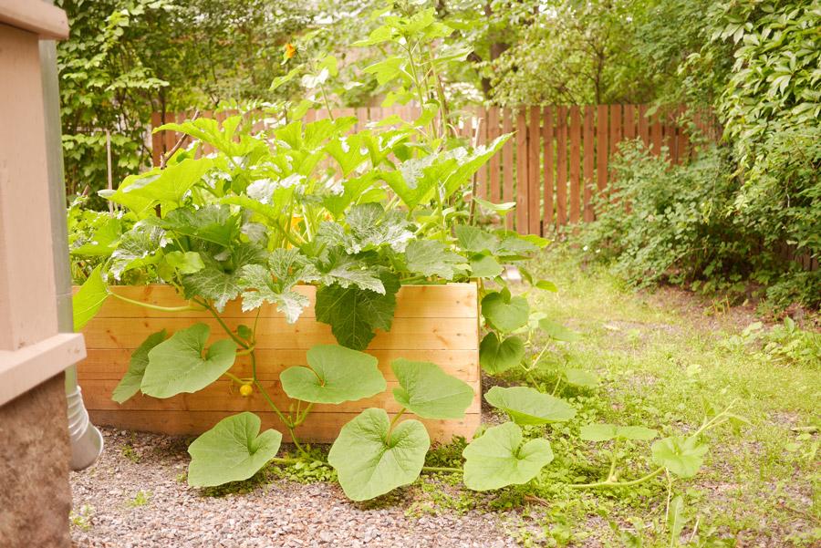 tuulinenpaiva.fi-raised-garden-bed-in-july
