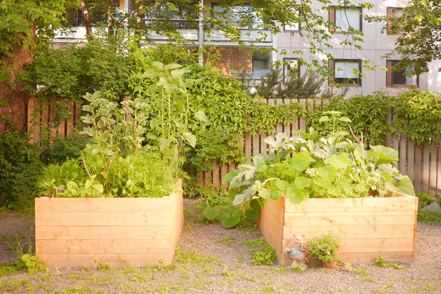 tuulinenpaiva.fi-raised-garden-beds-in-july